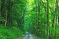 Hagerman Run Road (4) (27784206185).jpg