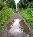 Half Puddled Trackbed - geograph.org.uk - 913308.jpg