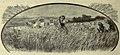Harvesting grain in a field.jpg