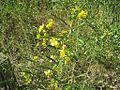Hatchie Natl Wildlife Refuge 078.jpg
