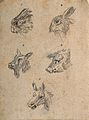 Heads of hares, a goat, a boar, and an ass. Drawing, c. 1789 Wellcome V0009140EL.jpg