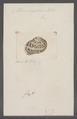 Helix aspersa - - Print - Iconographia Zoologica - Special Collections University of Amsterdam - UBAINV0274 089 01 0015.tif