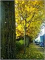 Herbst in Denzlingen - panoramio (1).jpg