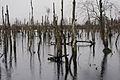 Herstel hoogveenlandschap Diepholz(DE), werkk voor Natuur, Saxifraga - Jan Nijendijk. 6728.jpg