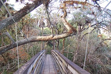 Hillsborough River State Park 16.jpg