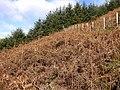 Hillside, Mynydd Clywedog - geograph.org.uk - 601139.jpg