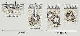 Histologie (3)