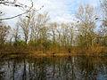 Hlyboke lake Muromets1.JPG
