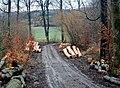Holzeinschlag - panoramio.jpg