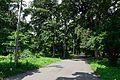 Hooker Avenue - Indian Botanic Garden - Howrah 2012-09-20 0100.JPG