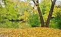 How about kicking the dead leaves - Allez-y, un bon coup de pied dans les feuilles mortes... - panoramio.jpg