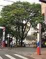 Início do Calcadão, Rua Bernadino de Campos, Esquina Rua Prudente de Moraes - São José do Rio Preto-SP. - panoramio.jpg