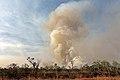 Incêndio no Parque Nacional de Brasília (36754976842).jpg