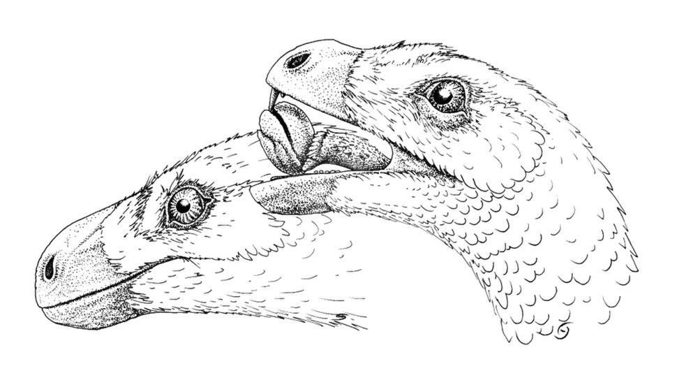 Incisivosaurus gauthieri head