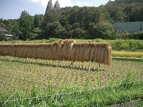 稲作 - Wikiwand