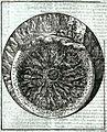 Inf. 06 Alessandro Vellutello (1534).jpg