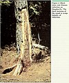 Insect and disease conditions in the United States, 1979-83 - what else is growing in our forests? (1985) (20385423650).jpg