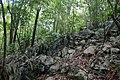 Intact kartic forest in Samana 136757131 10165281253250131 8673179491435373054 o.jpg