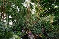 Interior main greenhouse Jardin des Plantes 2013-03-15 n02.jpg