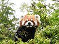 Ishikawa Zoo - Animals - 43 - 2016-04-22.jpg