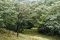 Izvoare – Risipeni, monument al naturii img 038.jpg