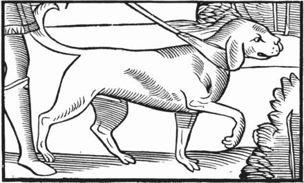 marderhunde in niedersachsen