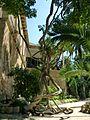Jardines de Alfàbia (15).jpg