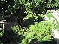 Jardins Monte Palacio - panoramio.jpg