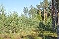 Jaunaudze, Ropažu pagasts, Ropažu novads, Latvia - panoramio.jpg