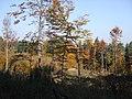 Jeseň - panoramio (1).jpg