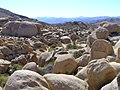 Joshua Tree National Park - panoramio (13).jpg