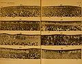Journal of morphology (1909) (14586949950).jpg
