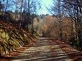 Jura Mountains - Col de Belleroche.jpg