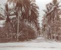 KITLV - 100576 - Stafhell & Kleingrothe - Medan-Deli - Deli Maatschappijlaan in Medan. (Avenue in Medan.) - circa 1890.tif