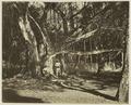 KITLV 26574 - Isidore van Kinsbergen - The Botanical Gardens at Buitenzorg - Around 1870.tif