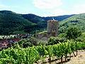 Kaysersberg château vignes.JPG