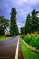 Kebun Raya Bogor 23.jpg