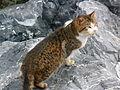 Kedi kedi.JPG