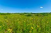 Kettle Moraine Low Prairie.jpg
