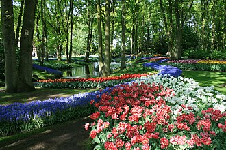 Keukenhof - Tulips at the Keukenhof in 2009