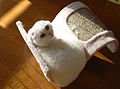 Kimi-kun - Scottish Fold - I'm Alone.jpg