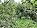 Kosmaj forest 9.jpg