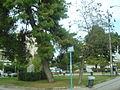 Kypriadou, Athens Papaloukas Square, 2010.JPG