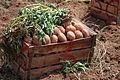 Légumes (7).JPG