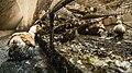 L214 - Couvoir du Saison, août 2020 - Un canard patauge au sol dans une mare de déjections. 01.jpg