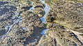 La playa del Confital en Las Palmas de Gran Canaria (16053640309).jpg