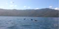 La ruta de los delfines.png