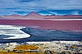Laguna Colorada, Bolívie - panoramio.jpg