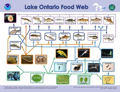 Lake Food Web