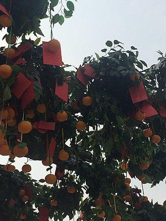Lam Tsuen wishing trees - Lam Tsuen Wishing Tree